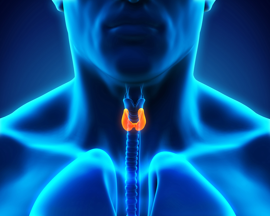 Senior Care in Valley Stream NY: Thyroid Disease in Seniors